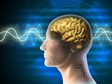 5 фактов о мозге, которые изменят вашу жизнь